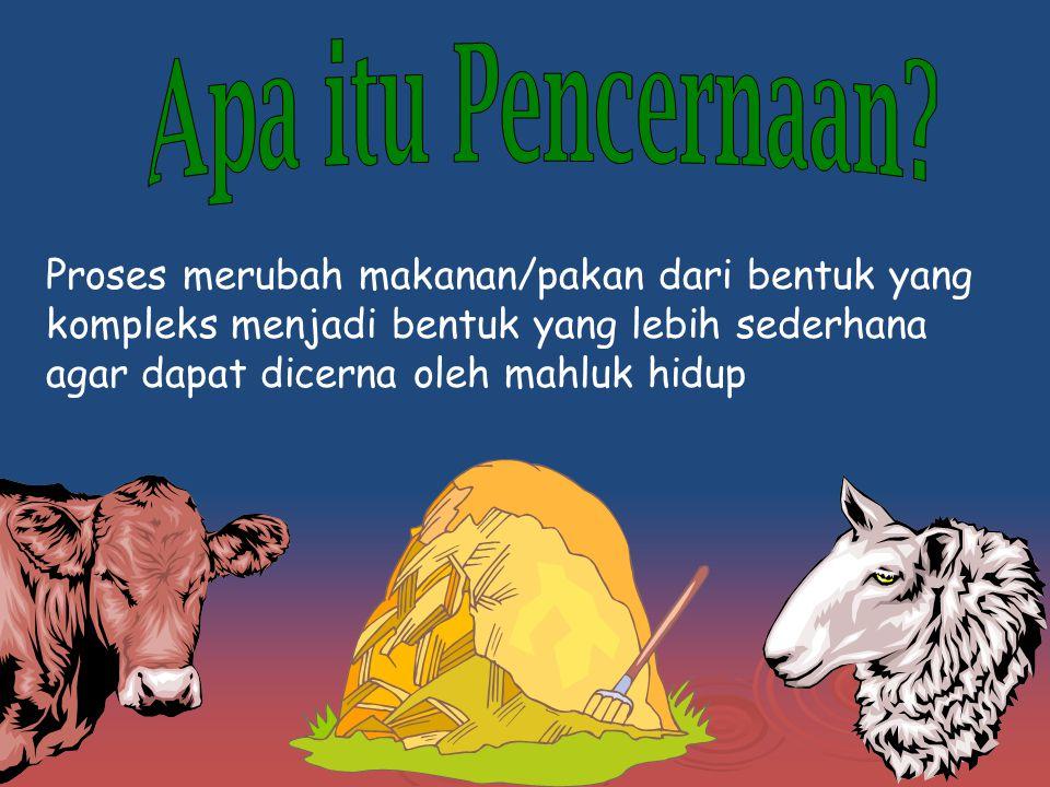 Sistem Pencernaan  MONOGASTRIK UNGGAS UNGGAS  POLIGASTRIK Sapi, Domba, Kambing Sapi, Domba, Kambing  MONOGASTRIK Mamalia Kelinci, Kuda, Babi, anjing, kucing Kelinci, Kuda, Babi, anjing, kucing  Berdasar : Saluran Makanan (Anatomi) Saluran Makanan (Anatomi) Makanan sumber energi Makanan sumber energi DLL DLL
