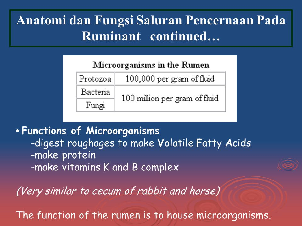 Anatomi dan Fungsi Saluran Pencernaan Pada Ruminant continued… Functions of Microorganisms -digest roughages to make Volatile Fatty Acids -make protein -make vitamins K and B complex (Very similar to cecum of rabbit and horse) The function of the rumen is to house microorganisms.