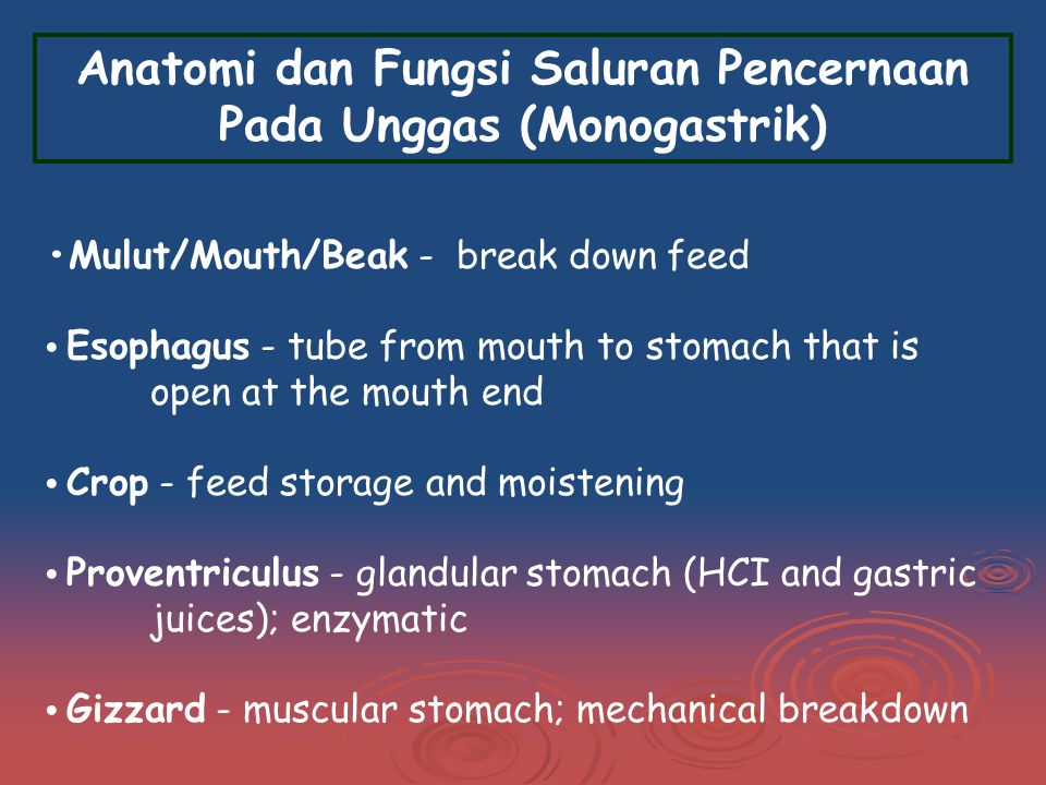 Mulut/Mouth/Beak - break down feed Esophagus - tube from mouth to stomach that is open at the mouth end Crop - feed storage and moistening Proventriculus - glandular stomach (HCI and gastric juices); enzymatic Gizzard - muscular stomach; mechanical breakdown Anatomi dan Fungsi Saluran Pencernaan Pada Unggas (Monogastrik)