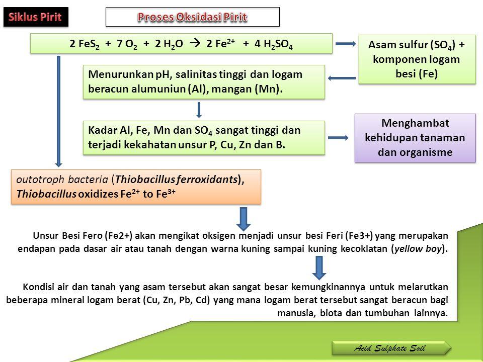 Menghambat kehidupan tanaman dan organisme 2 FeS 2 + 7 O 2 + 2 H 2 O  2 Fe 2+ + 4 H 2 SO 4 outotroph bacteria (Thiobacillus ferroxidants), Thiobacill