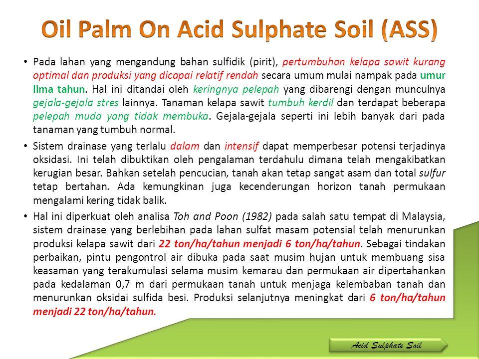 Pada lahan yang mengandung bahan sulfidik (pirit), pertumbuhan kelapa sawit kurang optimal dan produksi yang dicapai relatif rendah secara umum mulai