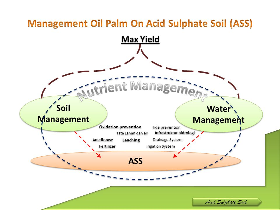 ASS Soil Management Water Management Max Yield Infrastruktur hidrologi Tata Lahan dan air Fertilizer Ameliorase Drainage System Irigation System Leach