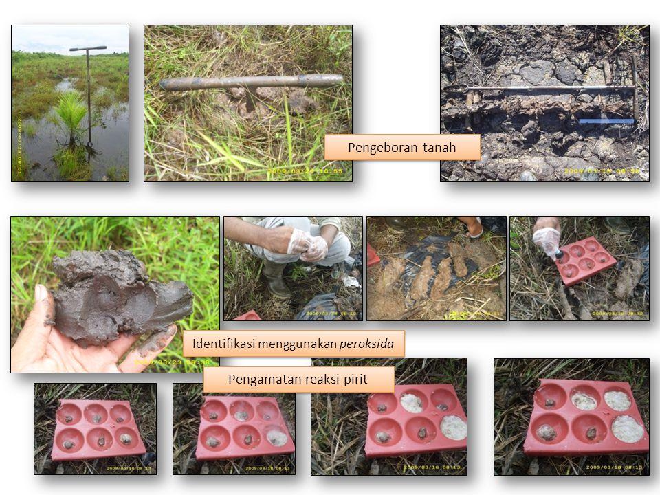 Pengeboran tanah Identifikasi menggunakan peroksida Pengamatan reaksi pirit