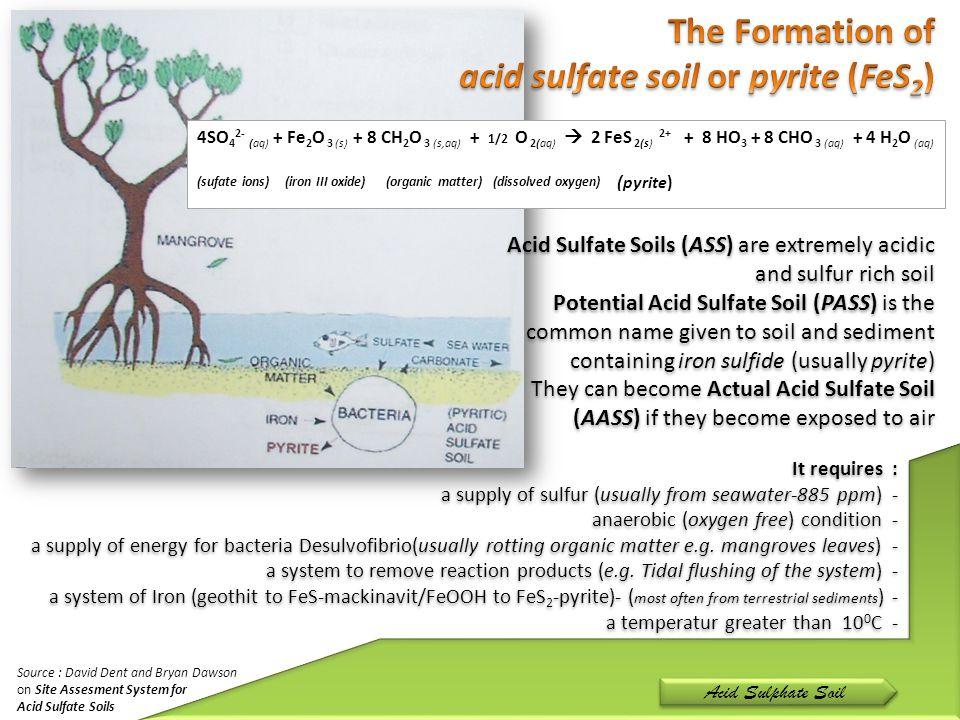 4SO 4 2- (aq) + Fe 2 O 3 (s) + 8 CH 2 O 3 (s,aq) + 1/2 O 2(aq)  2 FeS 2(s) 2+ + 8 HO 3 + 8 CHO 3 (aq) + 4 H 2 O (aq) (sufate ions) (iron III oxide) (