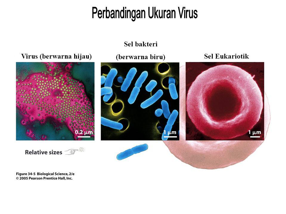 Perbandingan ukuran Virus (berwarna hijau) Sel bakteri (berwarna biru) Sel Eukariotik