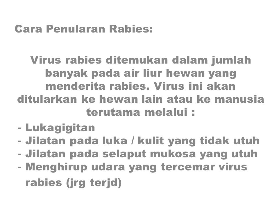 Cara Penularan Rabies: Virus rabies ditemukan dalam jumlah banyak pada air liur hewan yang menderita rabies. Virus ini akan ditularkan ke hewan lain a