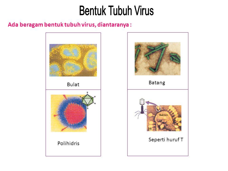 Ada beragam bentuk tubuh virus, diantaranya : Batang Seperti huruf T Bulat Polihidris