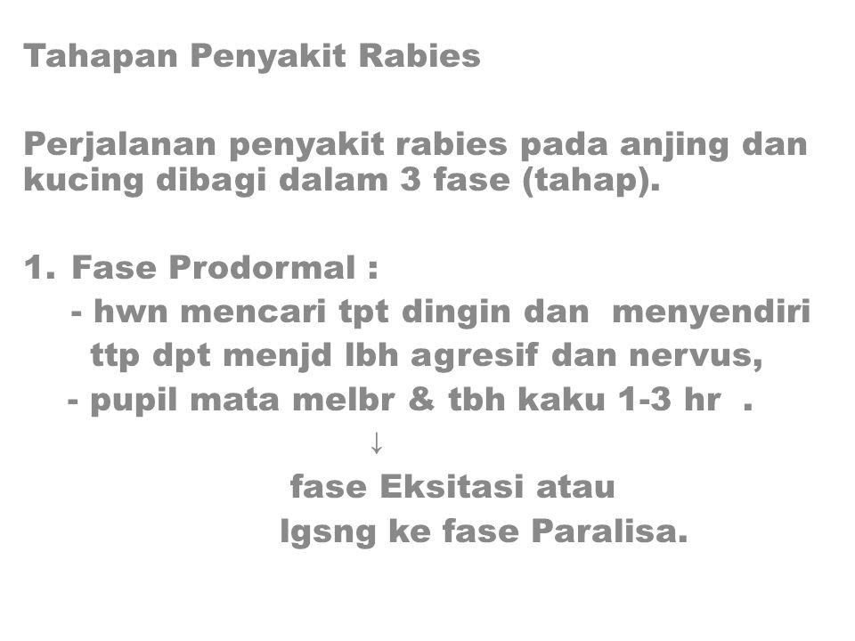 Tahapan Penyakit Rabies Perjalanan penyakit rabies pada anjing dan kucing dibagi dalam 3 fase (tahap).