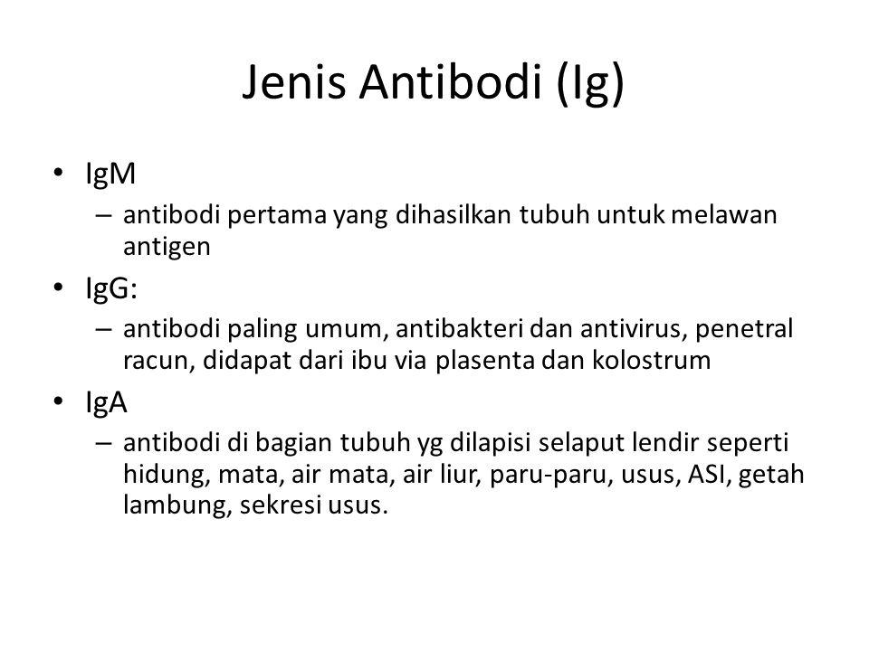 Jenis Antibodi (Ig) IgM – antibodi pertama yang dihasilkan tubuh untuk melawan antigen IgG: – antibodi paling umum, antibakteri dan antivirus, penetra