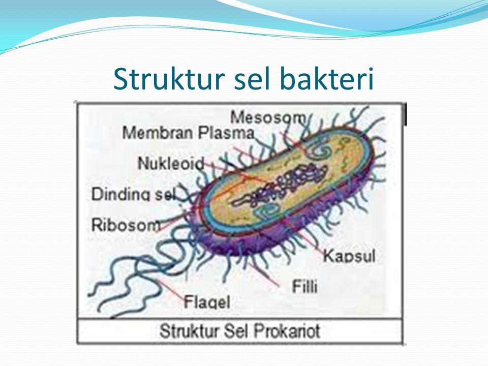 Struktur sel bakteri