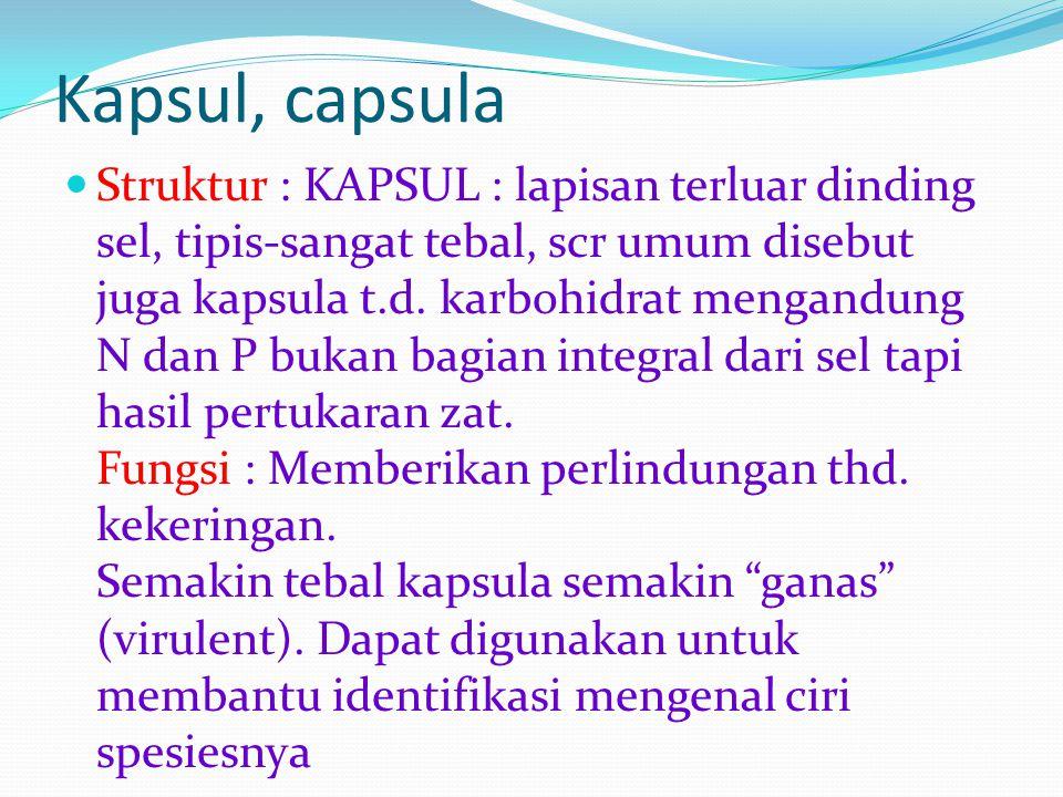 Kapsul, capsula Struktur : KAPSUL : lapisan terluar dinding sel, tipis-sangat tebal, scr umum disebut juga kapsula t.d. karbohidrat mengandung N dan P