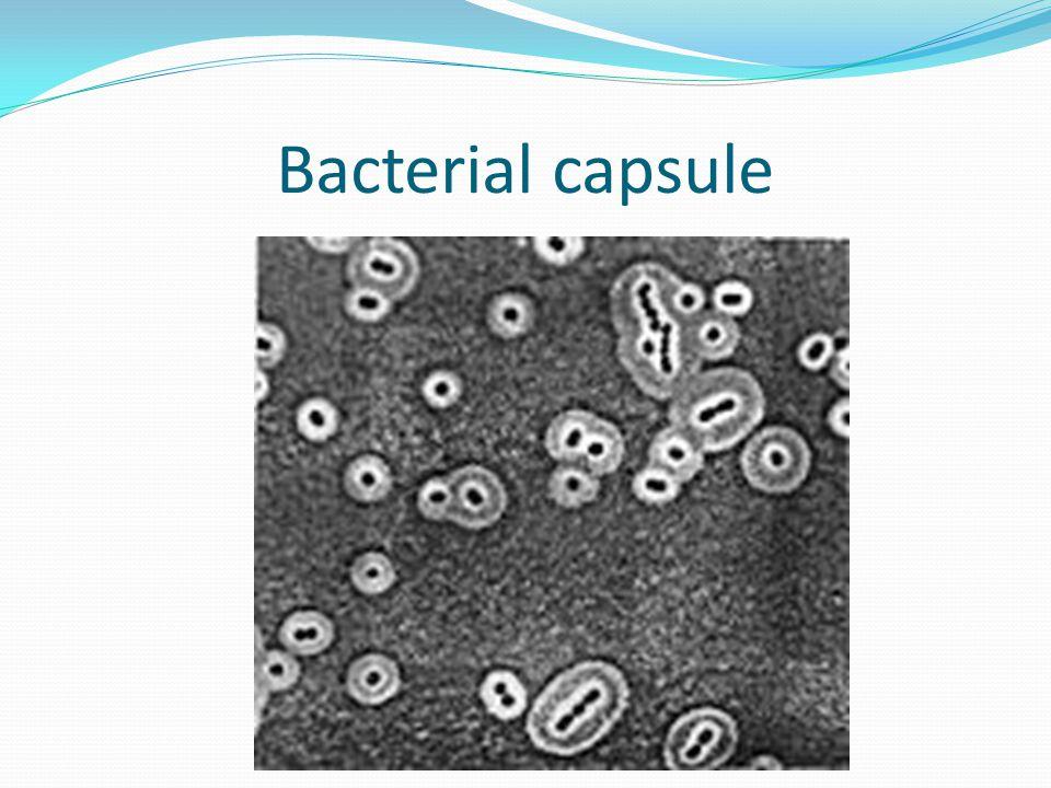 Bacterial capsule