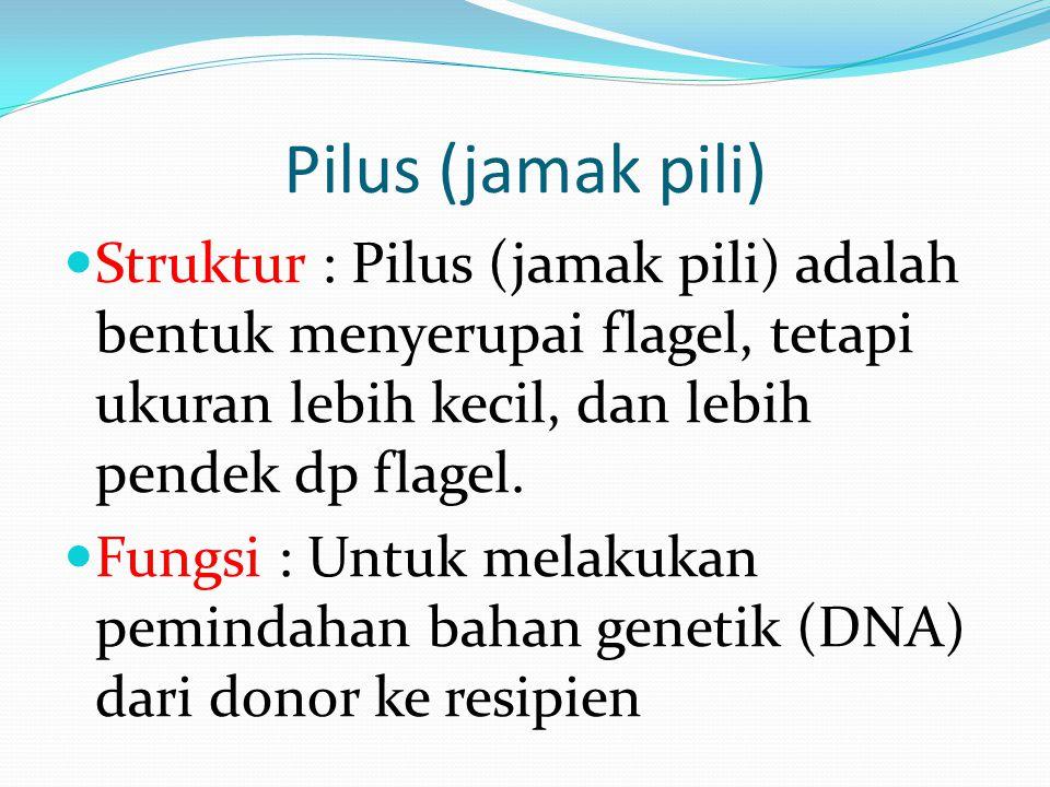 Pilus (jamak pili) Struktur : Pilus (jamak pili) adalah bentuk menyerupai flagel, tetapi ukuran lebih kecil, dan lebih pendek dp flagel. Fungsi : Untu