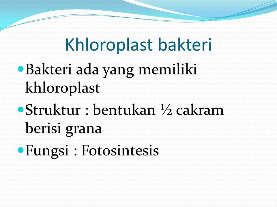 Khloroplast bakteri Bakteri ada yang memiliki khloroplast Struktur : bentukan ½ cakram berisi grana Fungsi : Fotosintesis