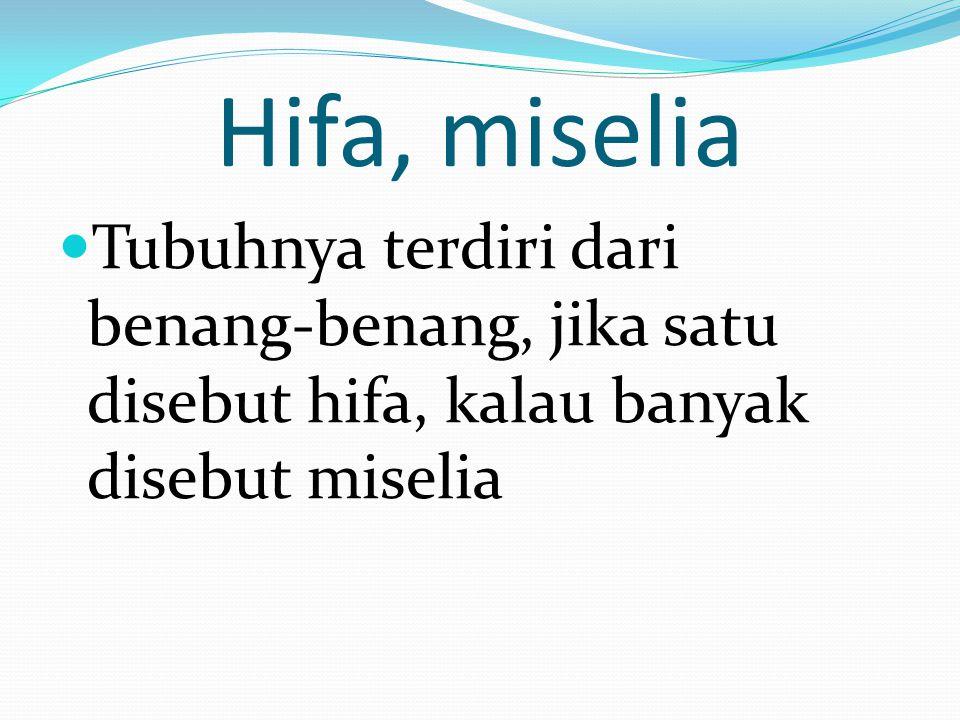 Hifa, miselia Tubuhnya terdiri dari benang-benang, jika satu disebut hifa, kalau banyak disebut miselia
