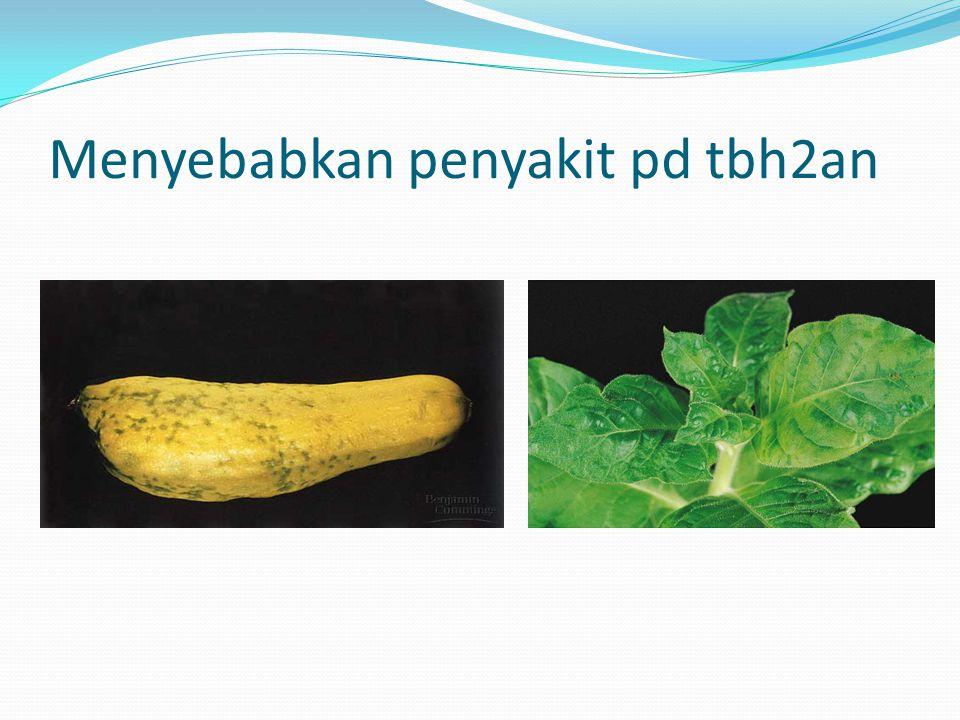 Menyebabkan penyakit pd tbh2an