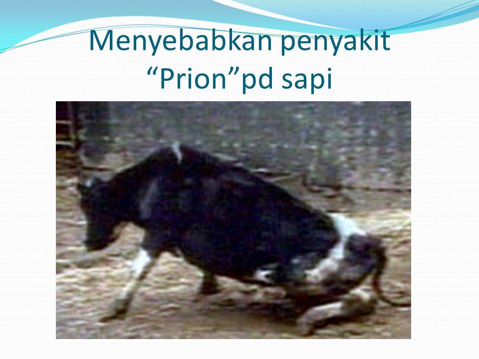 """Menyebabkan penyakit """"Prion""""pd sapi"""