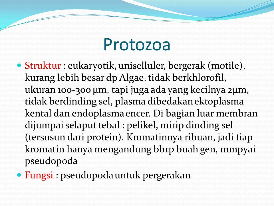 Protozoa Struktur : eukaryotik, uniselluler, bergerak (motile), kurang lebih besar dp Algae, tidak berkhlorofil, ukuran 100-300 µm, tapi juga ada yang