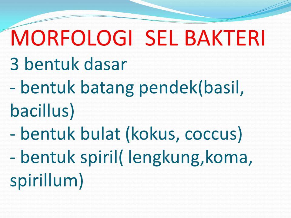 MORFOLOGI SEL BAKTERI 3 bentuk dasar - bentuk batang pendek(basil, bacillus) - bentuk bulat (kokus, coccus) - bentuk spiril( lengkung,koma, spirillum)
