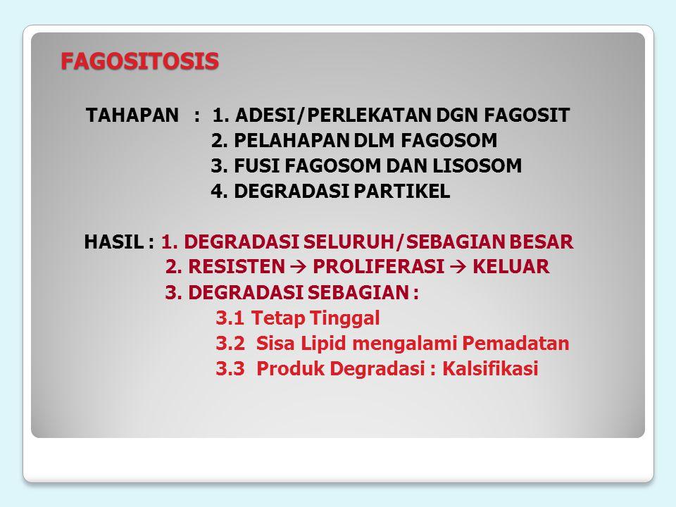 FAGOSITOSIS FAGOSITOSIS TAHAPAN : 1. ADESI/PERLEKATAN DGN FAGOSIT 2. PELAHAPAN DLM FAGOSOM 3. FUSI FAGOSOM DAN LISOSOM 4. DEGRADASI PARTIKEL HASIL : 1