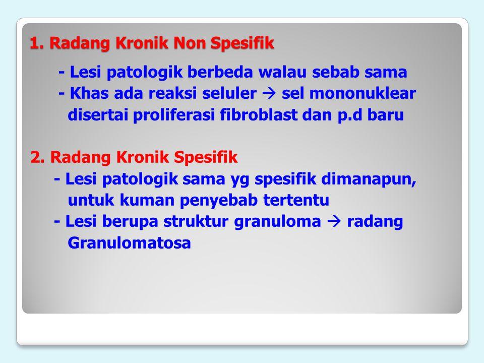 1. Radang Kronik Non Spesifik - Lesi patologik berbeda walau sebab sama - Khas ada reaksi seluler  sel mononuklear disertai proliferasi fibroblast da