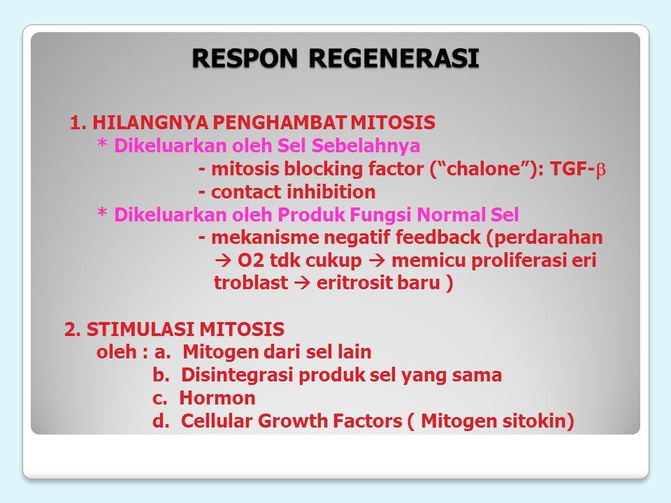 "RESPON REGENERASI 1. HILANGNYA PENGHAMBAT MITOSIS * Dikeluarkan oleh Sel Sebelahnya - mitosis blocking factor (""chalone""): TGF-  - contact inhibition"