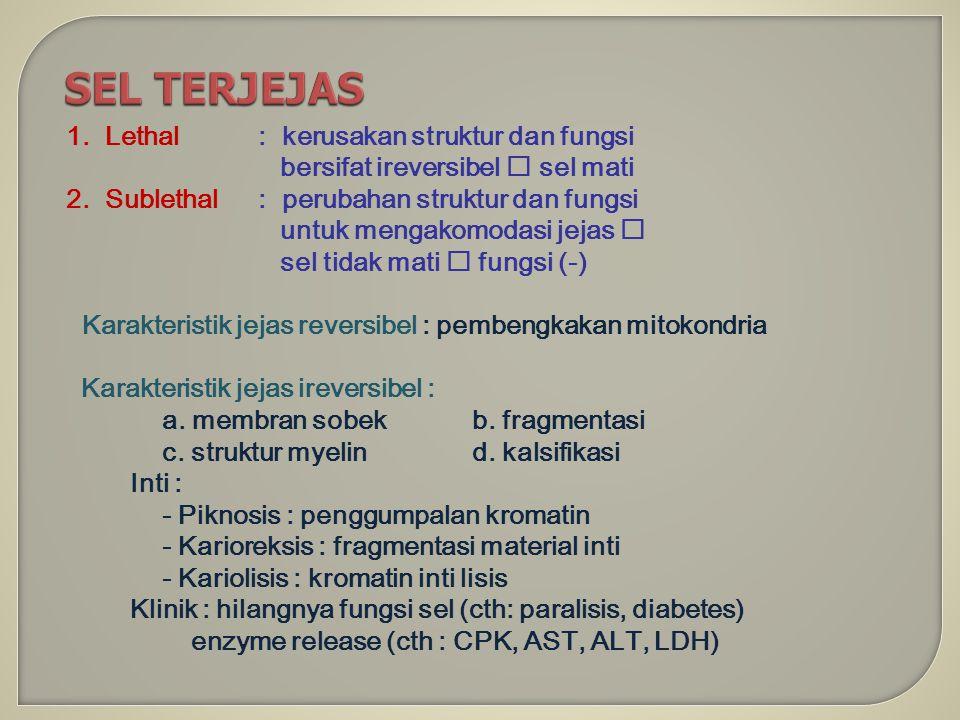 SEL TERJEJAS 1. Lethal : kerusakan struktur dan fungsi bersifat ireversibel  sel mati 2. Sublethal : perubahan struktur dan fungsi untuk mengakomodas