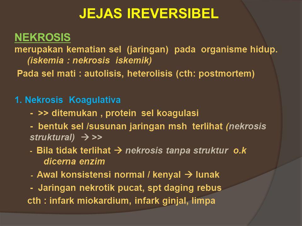 JEJAS IREVERSIBEL NEKROSIS merupakan kematian sel (jaringan) pada organisme hidup.