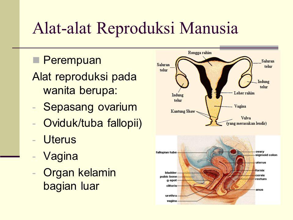 Alat-alat Reproduksi Manusia Perempuan Alat reproduksi pada wanita berupa: - Sepasang ovarium - Oviduk/tuba fallopii) - Uterus - Vagina - Organ kelami