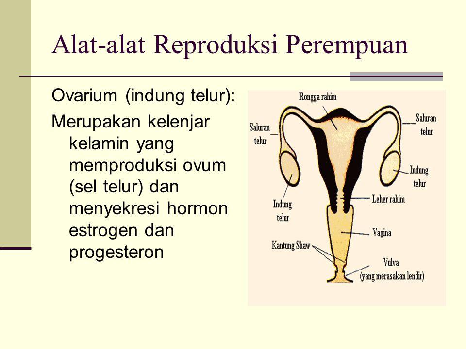 Alat-alat Reproduksi Perempuan Ovarium (indung telur): Merupakan kelenjar kelamin yang memproduksi ovum (sel telur) dan menyekresi hormon estrogen dan progesteron