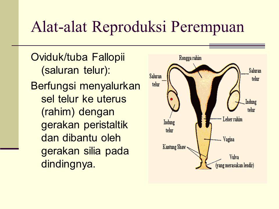 Alat-alat Reproduksi Perempuan Oviduk/tuba Fallopii (saluran telur): Berfungsi menyalurkan sel telur ke uterus (rahim) dengan gerakan peristaltik dan dibantu oleh gerakan silia pada dindingnya.