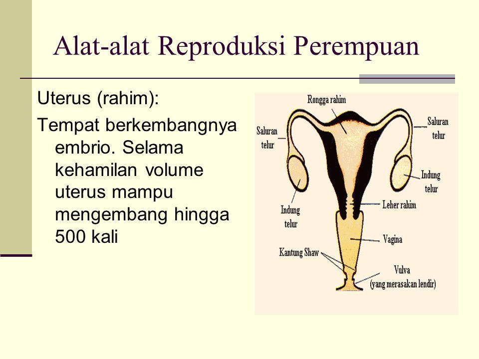 Alat-alat Reproduksi Perempuan Uterus (rahim): Tempat berkembangnya embrio. Selama kehamilan volume uterus mampu mengembang hingga 500 kali