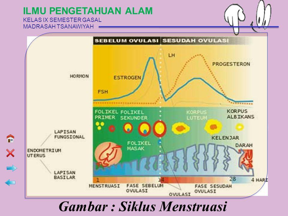 Gambar : Siklus Menstruasi ILMU PENGETAHUAN ALAM KELAS IX SEMESTER GASAL MADRASAH TSANAWIYAH