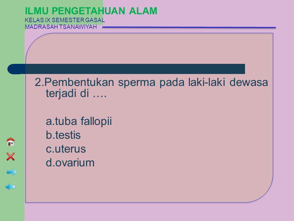 2.Pembentukan sperma pada laki-laki dewasa terjadi di …. a.tuba fallopii b.testis c.uterus d.ovarium ILMU PENGETAHUAN ALAM KELAS IX SEMESTER GASAL MAD