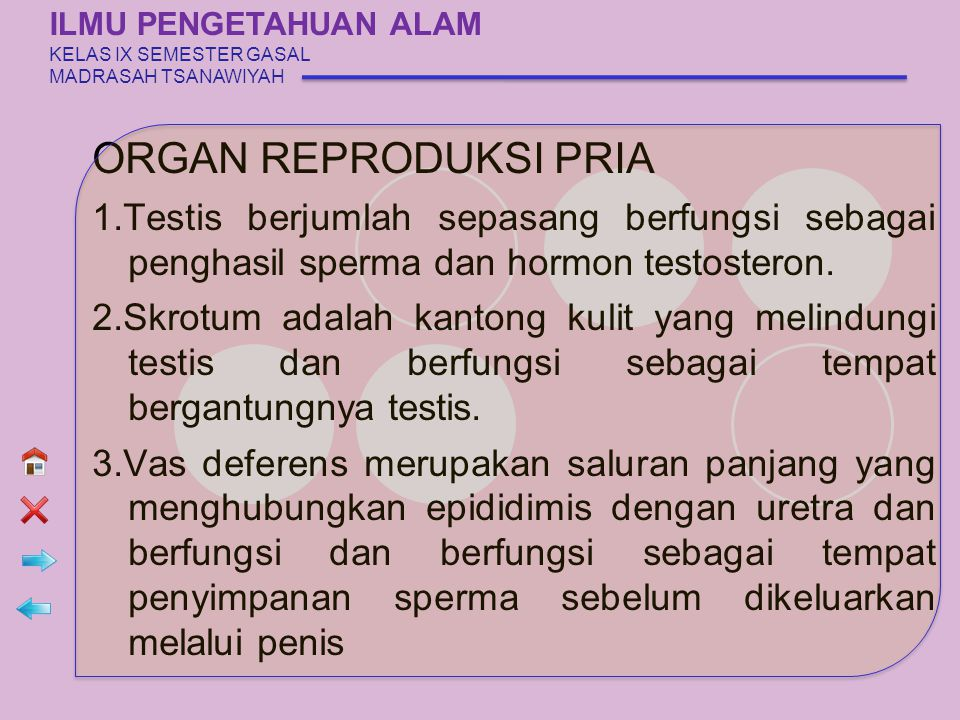 ORGAN REPRODUKSI PRIA 1.Testis berjumlah sepasang berfungsi sebagai penghasil sperma dan hormon testosteron. 2.Skrotum adalah kantong kulit yang melin