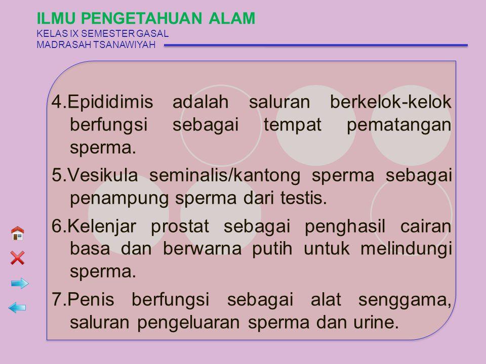 5 ORGAN REPRODUKSI WANITA Bagian-bagian 1 = Uterus 2 = Cervix 3 = Vagina 4 = Klitoris 5 = Labia Mayor ILMU PENGETAHUAN ALAM KELAS IX SEMESTER GASAL MADRASAH TSANAWIYAH