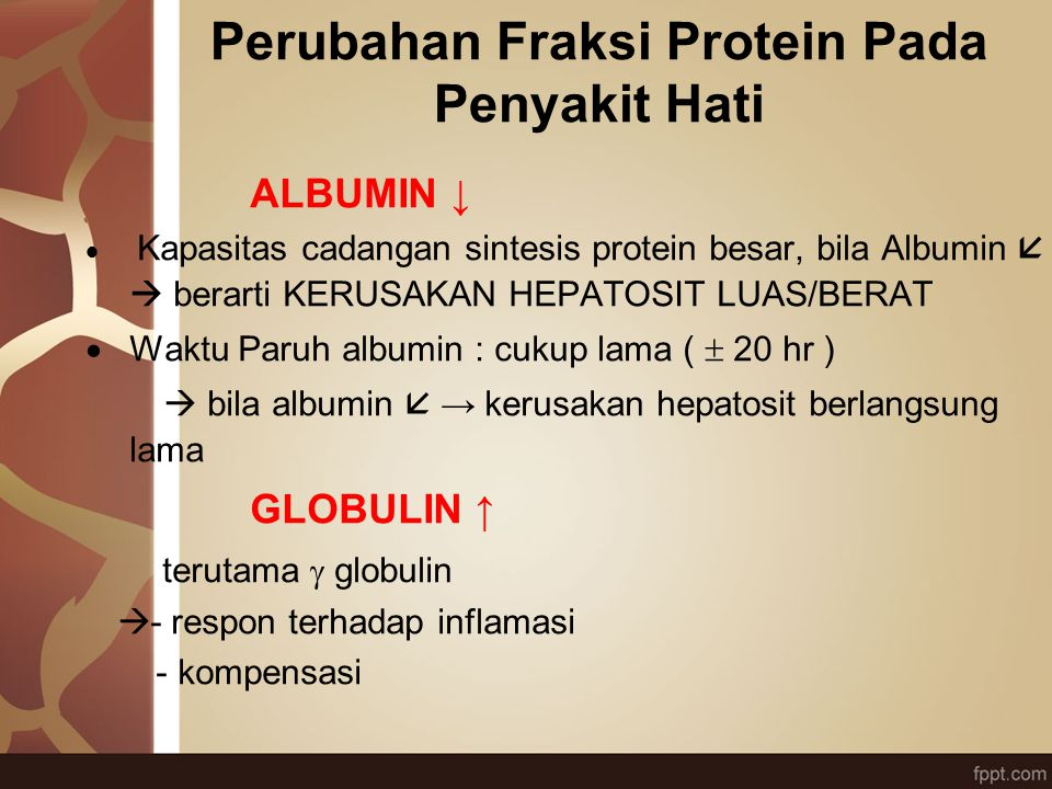 Perubahan Fraksi Protein Pada Penyakit Hati ALBUMIN ↓  Kapasitas cadangan sintesis protein besar, bila Albumin   berarti KERUSAKAN HEPATOSIT LUAS/B
