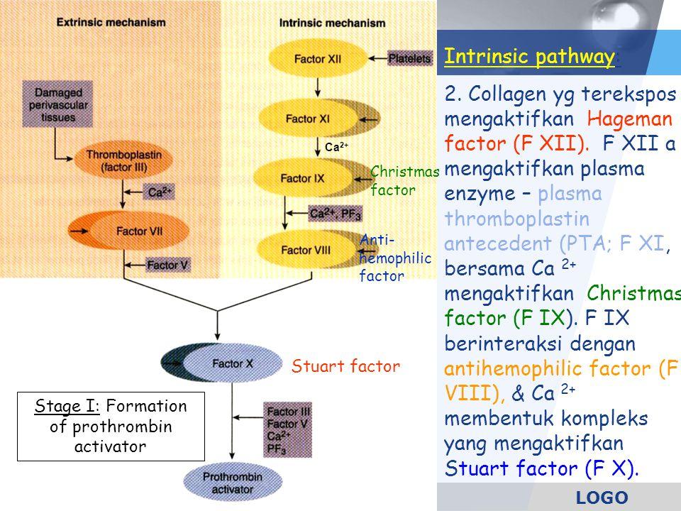 LOGO Intrinsic pathway: 2. Collagen yg terekspos mengaktifkan Hageman factor (F XII). F XII a mengaktifkan plasma enzyme – plasma thromboplastin antec