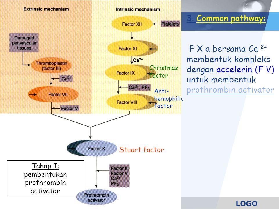 LOGO Tahap I: pembentukan prothrombin activator 3. Common pathway: F X a bersama Ca 2+ membentuk kompleks dengan accelerin (F V) untuk membentuk proth