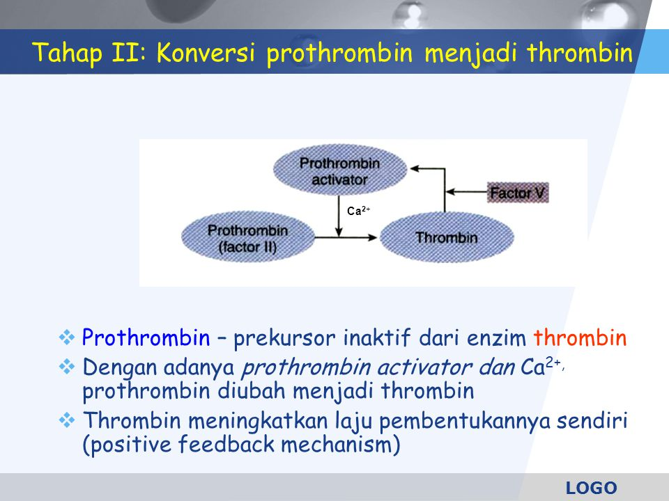 LOGO Tahap II: Konversi prothrombin menjadi thrombin  Prothrombin – prekursor inaktif dari enzim thrombin  Dengan adanya prothrombin activator dan C