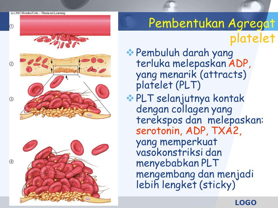 LOGO Pembentukan Agregat platelet  Pembuluh darah yang terluka melepaskan ADP, yang menarik (attracts) platelet (PLT)  PLT selanjutnya kontak dengan