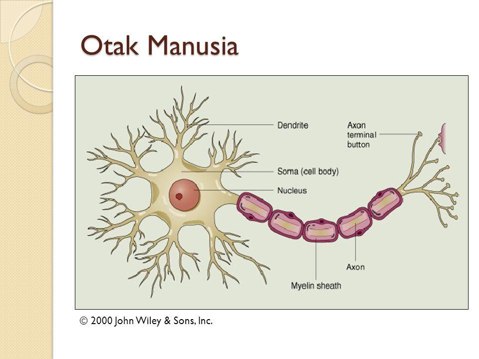 Otak Manusia Bertugas untuk memproses informasi Seperti prosesor sederhana.