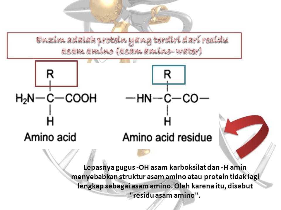Lepasnya gugus -OH asam karboksilat dan -H amin menyebabkan struktur asam amino atau protein tidak lagi lengkap sebagai asam amino. Oleh karena itu, d