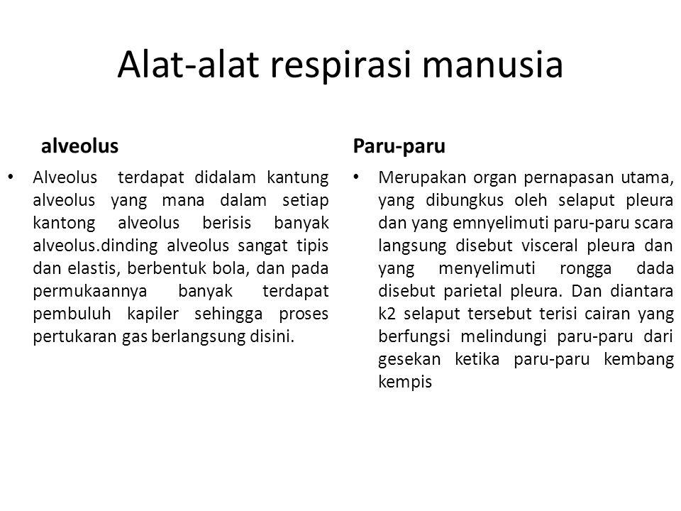 Alat-alat respirasi manusia alveolus Alveolus terdapat didalam kantung alveolus yang mana dalam setiap kantong alveolus berisis banyak alveolus.dindin
