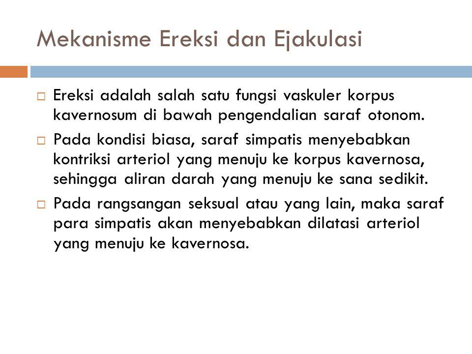 Mekanisme Ereksi dan Ejakulasi  Ereksi adalah salah satu fungsi vaskuler korpus kavernosum di bawah pengendalian saraf otonom.  Pada kondisi biasa,