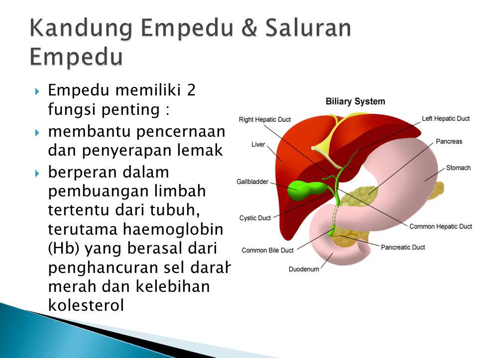  Empedu memiliki 2 fungsi penting :  membantu pencernaan dan penyerapan lemak  berperan dalam pembuangan limbah tertentu dari tubuh, terutama haemoglobin (Hb) yang berasal dari penghancuran sel darah merah dan kelebihan kolesterol