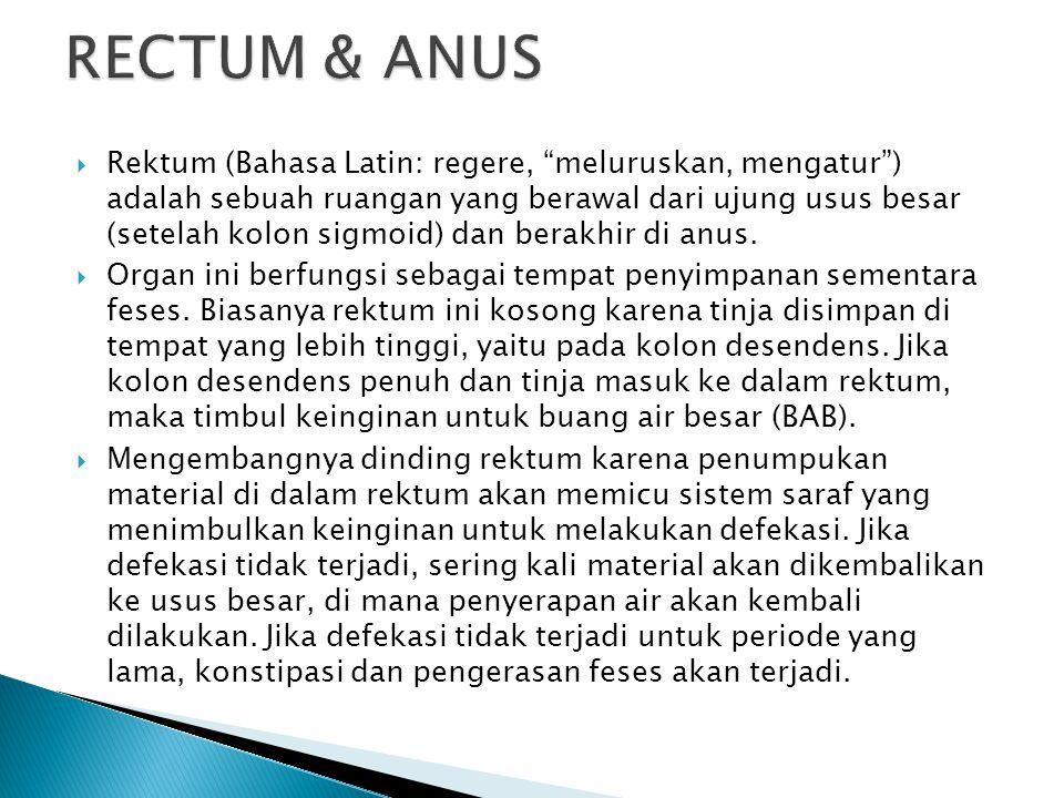 " Rektum (Bahasa Latin: regere, ""meluruskan, mengatur"") adalah sebuah ruangan yang berawal dari ujung usus besar (setelah kolon sigmoid) dan berakhir"