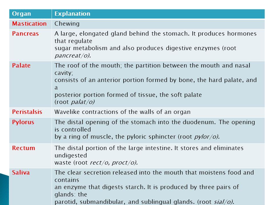 OrganExplanation MasticationChewing PancreasA large, elongated gland behind the stomach.