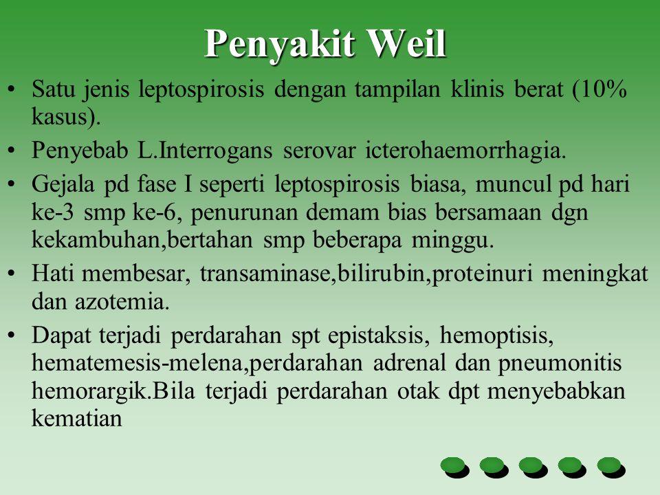 Penyakit Weil Satu jenis leptospirosis dengan tampilan klinis berat (10% kasus). Penyebab L.Interrogans serovar icterohaemorrhagia. Gejala pd fase I s