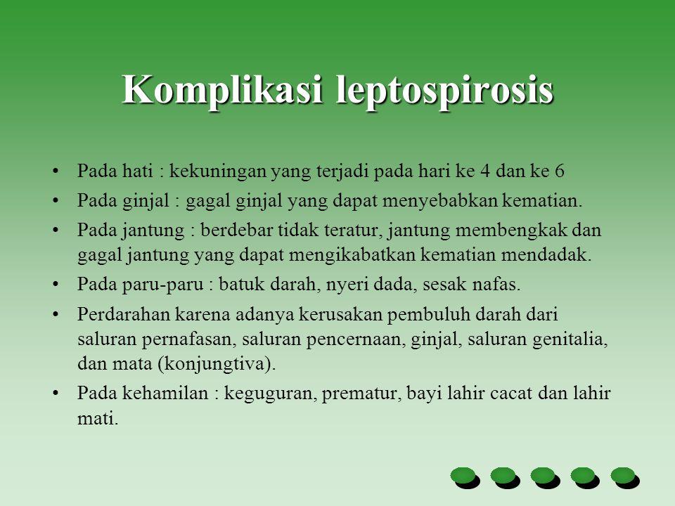 Komplikasi leptospirosis Pada hati : kekuningan yang terjadi pada hari ke 4 dan ke 6 Pada ginjal : gagal ginjal yang dapat menyebabkan kematian. Pada